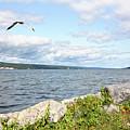 Sunny Day At Seneca Lake by Trina Ansel