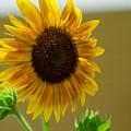 Sunny  Day by Jasmin Hrnjic