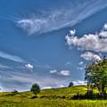 Sunny Day by Nina Ficur Feenan