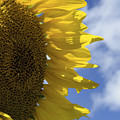 Sunny Faces And Blue Skies by Debra Fedchin