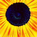Sunny Flower by Michele Roehl