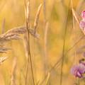 Sunny Garden 2 by Bonnie Bruno