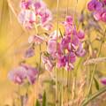 Sunny Garden 3 by Bonnie Bruno