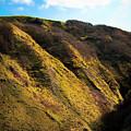 Sunny Hills by Svetlana Sewell