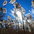 Sunny Marsh Beauty by Marty Kugler