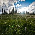 Sunny Meadows  by Robert J Caputo