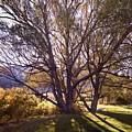 Sunny Mono Tree by Norman Andrus