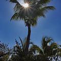 Sunny Palm by Bob Slitzan