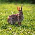 Sunny Bunny by Brian Manfra