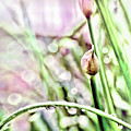 Sunny Rain by Jean OKeeffe Macro Abundance Art