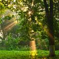 Sunny Rays by Sergei Dolgov