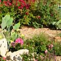 Sunny Rock Garden by Greg Hammond