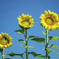 Sunny Skies by Claudia Kuhn