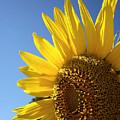 Sunny Skies by Donna Blackhall
