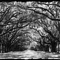 Sunny Southern Day - Black And White With Black Border by Carol Groenen