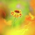 Sunny Spirit by Sarah-fiona Helme
