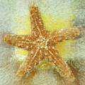 Sunny Star by Linda Sannuti