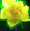 Sunny Tulip In Vase. by Alexander Vinogradov