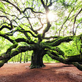 Sunris At Angel Oak Tree by Michael Ver Sprill