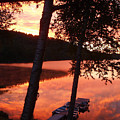 Sunrise And Birch Trees by Mary Lynne Crispo