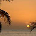 Sunrise And Palms by Mick Burkey