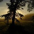 Sunrise Behind Elm Tree by Kent Lorentzen