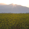 Sunrise Bursting Over The Kamnik Alps And Rapeseed by Ian Middleton