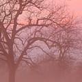 Sunrise Fog by Virginia Kay White