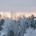 Sunrise Glos Behind Trees Frozen Trees by Travers Morgan