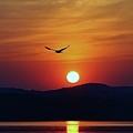 Sunrise Gull by Thomas McGuire