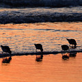 Sunrise Harmony by Dianne Cowen