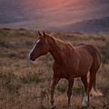 Sunrise Horse by Terri Cage