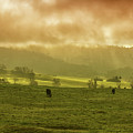 Sunrise In Foggy Pasture by Frank Wilson