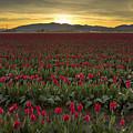 Sunrise In Skagit Valley by Bob Stevens