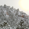 Sunrise In Snowstorm In The Pike National Forest by Steve Krull