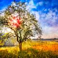 Sunrise Meadow by Debra and Dave Vanderlaan