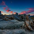Sunrise On The Jeffrey Pine by Rick Berk