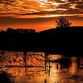 Sunrise Over A Pond by Maxwell Dziku
