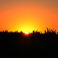 Sunrise Over Corn Field by Bill Cannon