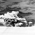 Sunrise Over Fort Salonga B W In Negative by Rob Hans