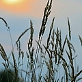 Sunrise Over Grass by Bonfire Photography