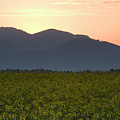 Sunrise Over The Kamnik Alps And Rapeseed by Ian Middleton