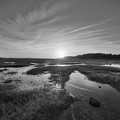 Sunrise Over The Marsh Bw by Michael Ver Sprill