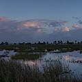Sunrise Over The Wetlands by David Watkins