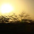 Sunrise by Robert Shahbazi