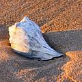 Sunrise Seashell by Allan Levin