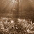 Sunrise Sepia by Carol Groenen