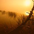 Sunrise Silhouettes by Irwin Barrett