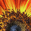 Sunrise Sunflower by Scott Campbell