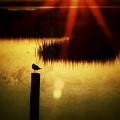 Sunrise Sunset Photo Art - A Ray Of Hope By Jo Ann Tomaselli by Jo Ann Tomaselli